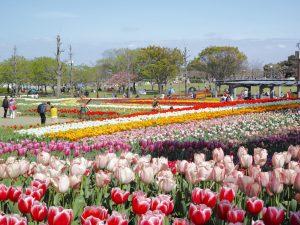 木曽三川公園のチューリップ1